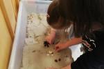 VODA A PÍSEK-sestavujeme obrázky se semínek